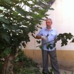 ... подстригли декоративный кустарник перед церковью и квартирой, предназначенной для приходского священника